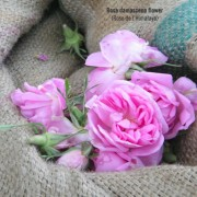 IMG_PS_roses