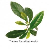 the_vert