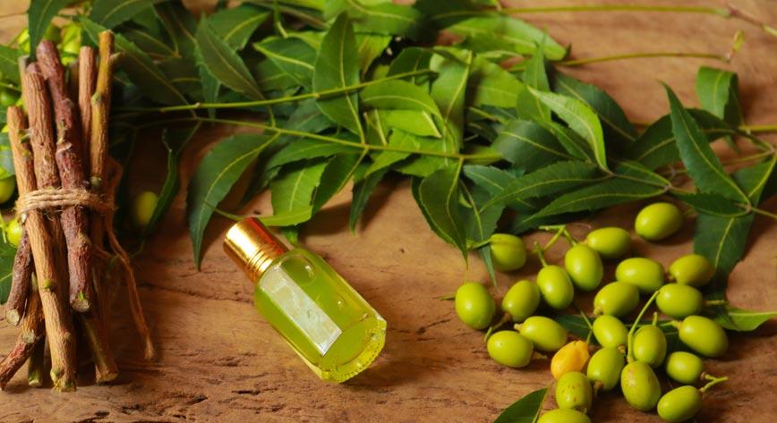 LETIKA huile ayurvedique neem fruit feuille racines
